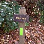 Rabun Bald, GA