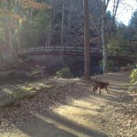 Panther Creek Trail (Section 2)